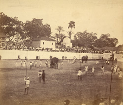 [View of an arena in Baroda with spectators watching an event involving elephants.]
